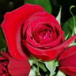 Valentine Special: Top 10 Romantic Valentine Gift