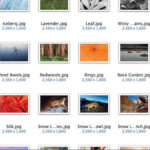 New Snow Leopard wallpapers downloads