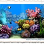 Tips to Screen your desktop to an Amazing Aquarium Now!